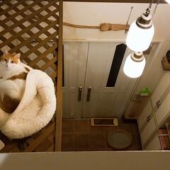ベッドルーム/にゃんこDIY/きなこ/猫/DIY/住まい/... 高い所が好きな【きなこ】😸に 玄関の吹き…