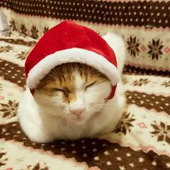 猫がいる暮らし/クリスマスアイテム/きなこ/にゃんこ先生/サンタ猫/ペット/... きなこ😸サンタ🎄🎅🎁✨ 意外とおとなしく…