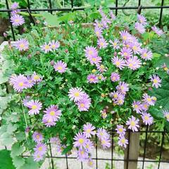 庭/住まい 小さい花は可愛いなぁ~☺️ 買って来たと…