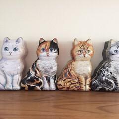猫の形/可愛い/空き缶/フォロー大歓迎/猫/にゃんこ同好会/... 猫の形をした空き缶🐾