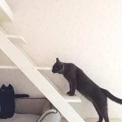 階段/猫/キャットウォーク/キャットウォークDIY/住まい/暮らし/... 色んな所にキャットウォークをDIY🐾 (3枚目)