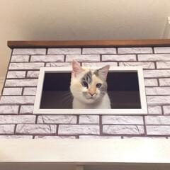 キャットウォークDIY/キャンドル/フェイクグリーン/フェイクフラワー/飾り棚/DIY/... 飾り棚の1番上を猫のペントハウス🐾  セ…(2枚目)