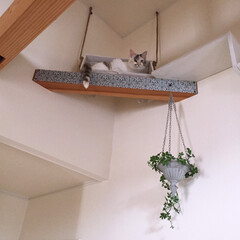 猫/遊び場/フェイクグリーン/ハンギング/梁/天井/... キャットウォーク先に設置した ブランコ(…