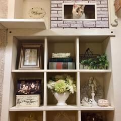 キャットウォークDIY/キャンドル/フェイクグリーン/フェイクフラワー/飾り棚/DIY/... 飾り棚の1番上を猫のペントハウス🐾  セ…