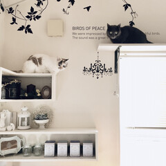 ウォールステッカー/キャットウォーク/キャットウォークDIY/シェルフDIY/癒しの空間/フォロー大歓迎/... 愛猫の為に作った飾り棚兼、 キャットウォ…