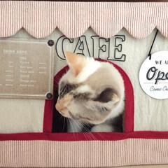 カフェ/猫カフェ/段ボール/猫/DIY/雑貨/... 段ボールにカバーを手作りして 猫カフェア…