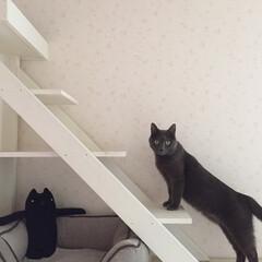階段/猫/キャットウォーク/キャットウォークDIY/住まい/暮らし/... 色んな所にキャットウォークをDIY🐾