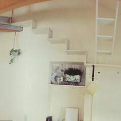 パノラマ/猫の遊ぶ場所/雑貨/グリーン/ハンギング/ブランコ/... DIYキャットウォーク🐾 パノラマで撮っ…