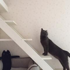 階段/猫/キャットウォーク/キャットウォークDIY/住まい/暮らし/... 色んな所にキャットウォークをDIY🐾 (2枚目)