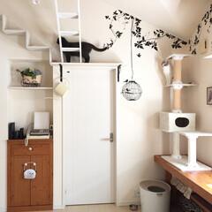 ホワイト/遊ぶ/階段/ハシゴ/ウォールステッカー/DIY/... 猫の為の空間です。 アイデア投稿で細かく…