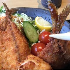 ランチ/おでかけ 地魚フライ定食、850円。 サク💕ふわ💕…(3枚目)