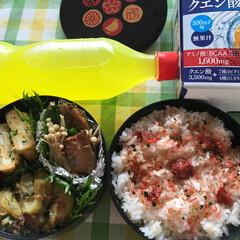 節約/フード 今日のお弁当 鯖の生姜焼きの缶詰にえのき…
