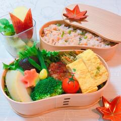 秋色お弁当/お弁当 鮭の混ぜご飯🍚