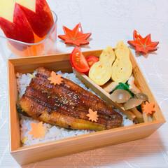 秋色お弁当/鰻/お弁当 うなぎ♡