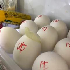 ゆで卵と生卵/リーゼント ゆで卵と生卵 分かるようにマジックで書い…(2枚目)