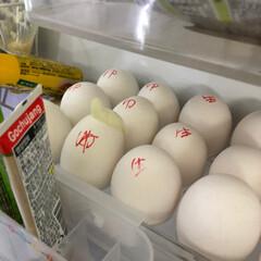 ゆで卵と生卵/リーゼント ゆで卵と生卵 分かるようにマジックで書い…