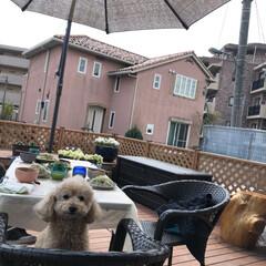 ランチ/ペット/犬/おウチカフェ おうちのテラス席