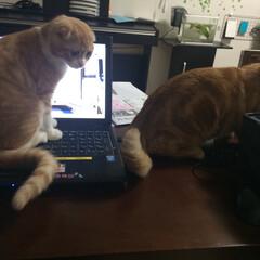 猫たち ご飯の時間が近くなるとこうなる
