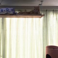 キャットウォーク/キャットタワー/天井/長ネジ お正月休みに旦那さまと猫の場所を作りまし…