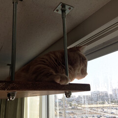 長ネジ/天井/キャットウォーク/キャットタワー お正月休みに旦那さまと猫の場所を作りました