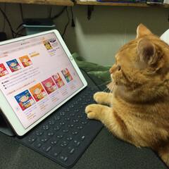 Amazon/iPad/猫 Amazonでちゃおちゅーるポチるにゃむ