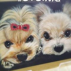 こっこのお店/犬似顔絵/うちの子似顔絵/minne/ラクマ/メルカリ/... ヨークシャちゃんだよ😁  今回は、プレゼ…(2枚目)