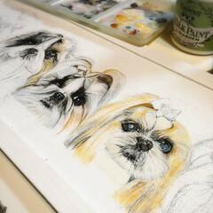 """フラワーアート/インテリア/シーズー犬/犬大好き/犬似顔絵/似顔絵/... シーズー犬""""〆(^∇゜*)♪5匹描きます…"""