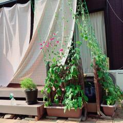 ウッドデッキ/アサガオ/リフォーム 我が家の暑さ攻略法🌿  3年前に購入した…