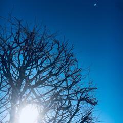 お墓詣り/帰省/冬/風景 年末年始に帰省した時。 大雪の翌日カラッ…