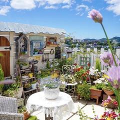 小屋/花のある暮らし/ベランダガーデン/テラス/屋上/ルーフバルコニー/... ルーフガーデン✨  夏空に近づいてきた気…