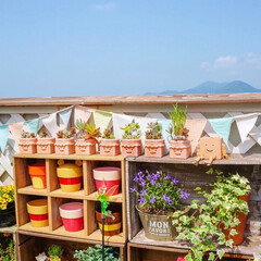 ガーデニング/花と緑のある暮らし/多肉植物/ベランダガーデニング/令和元年フォト投稿キャンペーン/LIMIAインテリア部/... こんにちは☀️ はに丸君たちを日光浴させ…