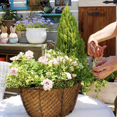 ベランダガーデニング/ガーデニング/ルーフバルコニー/テラス/ベランダガーデン/花のある暮らし 花のお世話🌱🌱🌱  花のお手入れにつ…(2枚目)