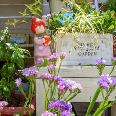 花言葉/ドライフラワー/花が好き/花と緑のある暮らし/ベランダガーデニング/ガーデン雑貨/... こんにちは🎵 晴れた日のマイガーデン🍀🌼…