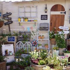 花のある暮らし/多肉植物/マイガーデン/ガーデニング/ナチュラルガーデン/ベランダガーデニング/... ゼロから手作りしたナチュラルガーデン🌼 …
