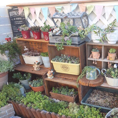 多肉の寄せ植え/ガーデンテラス/マンション/ベランダガーデニング/マイガーデン/セダム/... 先日頂いたリンゴ箱やワイン箱で棚を作り、…