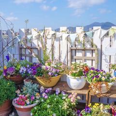 春の寄せ植え/春の花/ベランダガーデニング/花のある暮らし/DIY おはようございます💕  昨日は、気温…