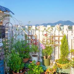 花のある暮らし/ガーデニング/ベランダガーデニング 雲ひとつない秋晴れの一日でした☀️