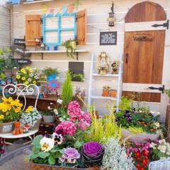 ガーデニング/手作りガーデン/ベランダガーデニング/花が好き/花の寄せ植え おはようございます☀️ 毎年クリスマスの…
