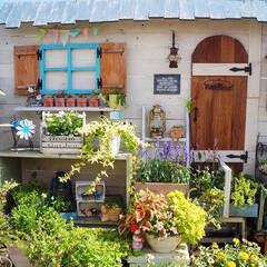 手作りガーデン/花と緑のある暮らし/ベランダ/ガーデニング/DIY/おうち自慢 こんばんは🎵 数日間、嫌になるほど降った…