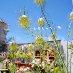 ベランダDIY/青空ガーデン/花が好き/花のある暮らし/ベランダガーデニング/LIMIAインテリア部 おはようございます🎵 青空が戻った、昨日…(5枚目)