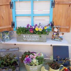 ガーデン雑貨/ウッドフェンス/ベランダDIY/手作りガーデン/マイガーデン/ガーデニング/... こんにちは~ 連休中に少し花の手入れをし…