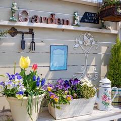 ガーデン雑貨/花のある暮らし/ベランダガーデニング/ルーフバルコニー/パーゴラ/ガーデニング/... おはようございます🎵 ポカポカ陽気が続い…
