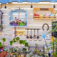ガーデニング/ガーデニングdiy/花の寄せ植え/ベランダガーデニング/DIY/リミアな暮らし おはようございます🍀  昨日は、日中23…