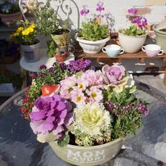 花が好き/ベランダガーデニング/手作り小屋/多肉植物/青空リビング/花の寄せ植え/... おはようございます🎵 ここのところ、いい…