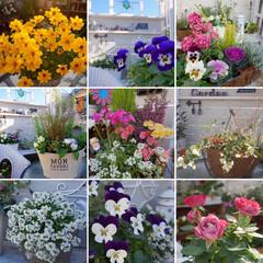 手作りガーデン/花のある暮らし/花が好き/ベランダガーデニング/ガーデニング/2018 お気に入りのお花ショット📸2018
