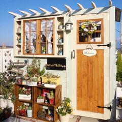 花と緑のある暮らし/多肉植物/ガーデニング/ベランダガーデニング/手作り小屋/手作りリース/... おはようございます☀️ 昨日に引き続き、…