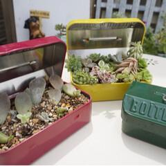ガーデニング/ガーデン雑貨/セリア/ベランダガーデニング/ツールボックス/セリアで購入/... セリアのツールボックス✨ 多肉との相性良…