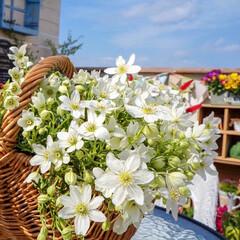 花が好き/テラス/ルーフバルコニー/ベランダDIY/ナチュラルガーデン/ベランダガーデニング/... 今日から4月✨💕 大好きな花でスタートで…