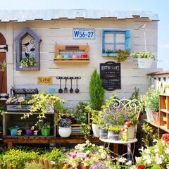 青空ガーデン/花と緑のある暮らし/ガーデニング/令和元年フォト投稿キャンペーン/LIMIAインテリア部/雑貨/... こんばんは~🌃🌙*゚ 久しぶりに晴れて …
