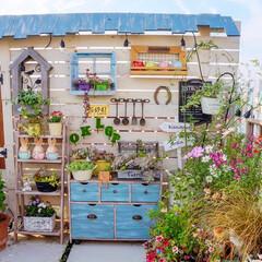 ガーデン雑貨/花のある暮らし/多肉植物/ガーデニング/ベランダガーデニング おはようございます️️️⛅️  お天気が…